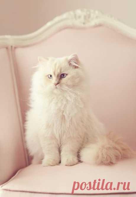 ~CATS~