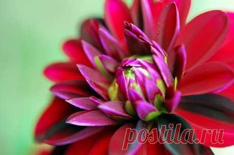 Письмо «сообщение Schamada : Цветы фотографа Andrew Kearton (23:18 04-06-2014) [3907317/326785442]» — Schamada — Яндекс.Почта