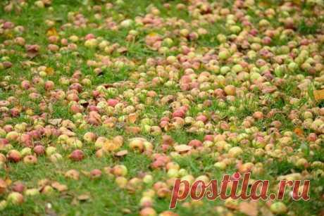 Нужно ли убирать растительные остатки из сада и огорода осенью? | Почва и плодородие (Огород.ru)