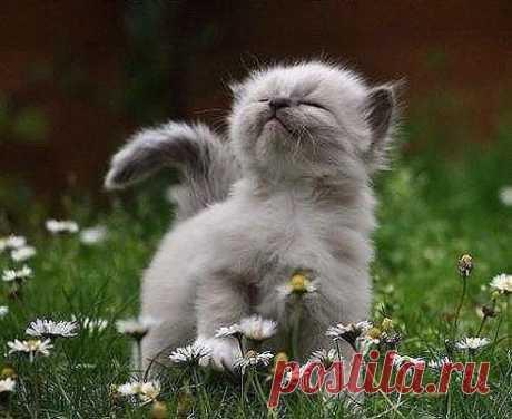 Поскольку, настроение всегда бывает разным, то пусть же чередуется — хорошее с прекрасным!!!