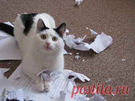 Los usuarios de la red han repartido las pruebas siguientes de lo que los gatos - aquel todavía los canallas