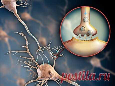 Серотонин — гормон радости и счастья: как восполнить нехватку Серотонин присутствует во многих внутренних органах (кишечнике, мышцах, сердечно-сосудистой системе и т.д.), но огромная его часть содержится именно в мозге, где он оказывает влияние на работу клеток и передает информацию из одной части мозга в другую. Серотонин регулирует работу клеток, которые отвечают за настроение человека, память, социальное поведение, интимное желание, работоспособность, концентрацию внимания и т.д.
