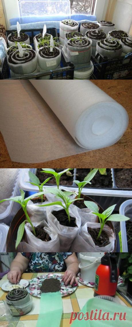 Посадка семян перца в «улитку»: как посадить, срок посева и пошаговая инструкция, видео