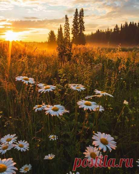 Ликующе трепещут на рассвете травинки в нежных капельках росы...