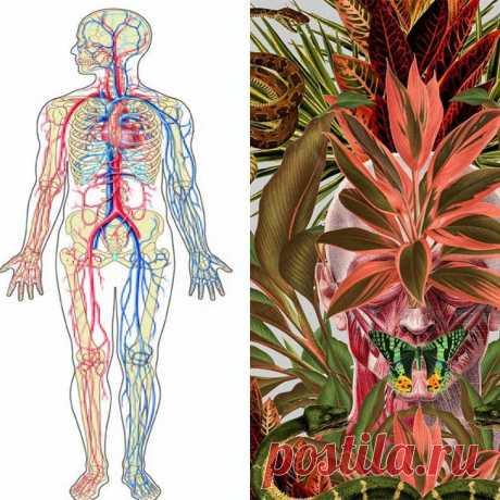 Убираем шлаки и лишние килограммы Касторка - прекрасное растительное мощное очищающее средство, которое люди применяли издавна. Оно настолько сильно, что тянет в просвет кишечника все негативные накопления всего организма. В касторово...