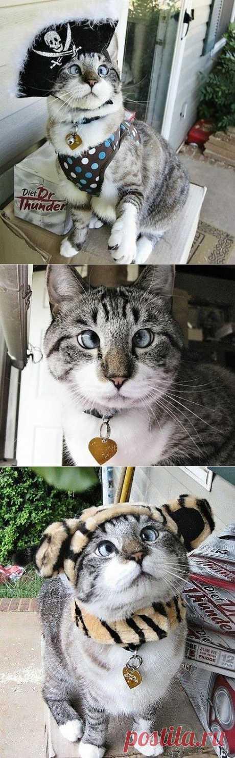 Ужасно милый косоглазый котик! >^_^<