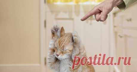 Что делать, чтобы кот не драл обои — Полезные советы
