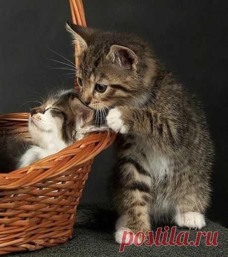 Cat n Day
