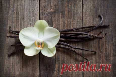 Ваниль: полезные свойства, сорта, как растет и выглядит растение в стручках и цветах, как использовать и хранить палочки, состав, калорийность