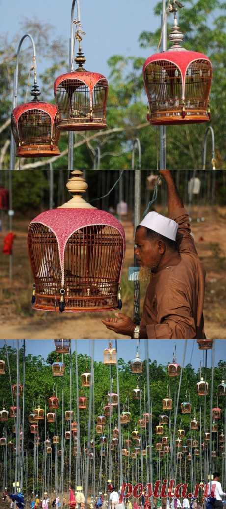 Конкурс певчих птиц в Таинланде | В мире интересного