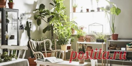 Растения в интерьере: 7 идей для домашнего сада | ELLEDECORATION