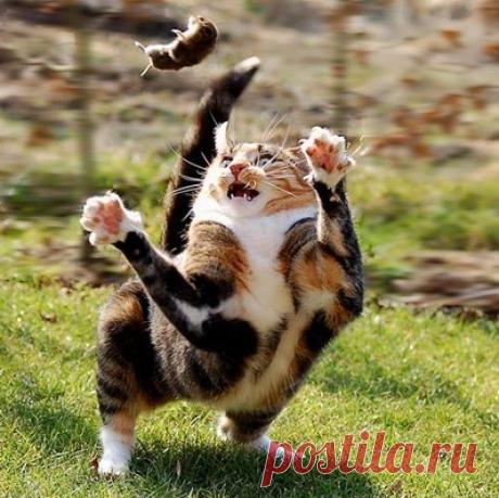 Приколы с животными — бесстыжий кот | new crazy animals 42 | Livefilms | Яндекс Дзен