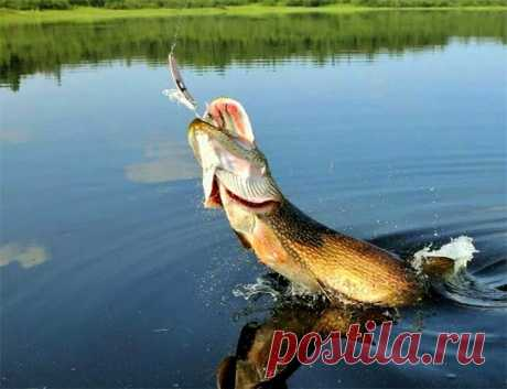 Результативная проводка «колебалки» - малоизвестный способ - 1 | Рыбалка для людей | Яндекс Дзен