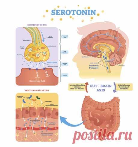 Как повысить уровень гормона счастья Многие замечают, как с наступлением холодного времени года настроение ухудшается, ничего не хочется делать, теряется уверенность в себе, терзает тревожность и апатия. На эмоциональное состояние огромное влияние оказывают гормоны, которые производятся в коре головного мозга, кишечнике и надпочечниках.