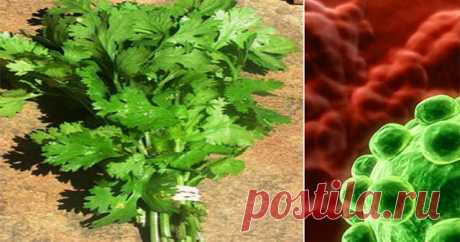 Это удивительное растение может убить 86% клеток рака легких! - Полезные советы красоты