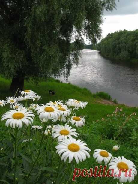 Лето как выходные: Такое же прекрасное, и так же быстро проходит...  Июнь – это пятница, июль – суббота, август – воскресенье...                                                                                         (Марина Цветаева)
