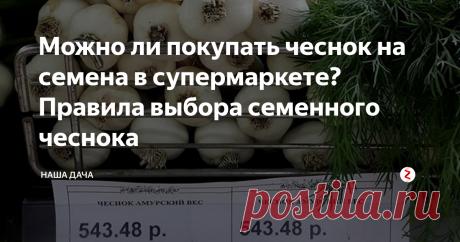 Можно ли покупать чеснок на семена в супермаркете? Правила выбора семенного чеснока  Одна форумчанка на одном известном огородном портале поделилась своим, как говорит молодежь, «лайфхаком». По совету одного своего знакомого она пошла за семенами… в обычный супермаркет. Ну, где овощи навалены кучей по ящикам и где есть возможность самим выбрать любой понравившийся экземпляр.  Самое главное в этом деле – не торопиться. Итак, что мы ищем?
