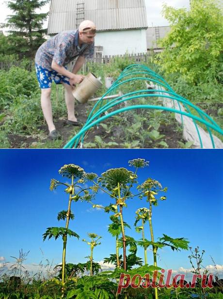Что надо успеть сделать в июле на даче? Советы опытного садовода   Дача   СЕЛЬСКОЕ ХОЗЯЙСТВО   АиФ Уфа