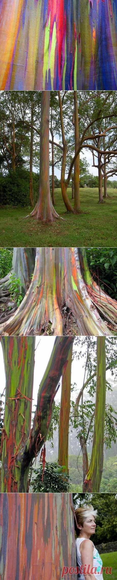Дерево-радуга