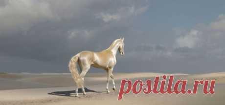 Встречайте самую редкую и красивую лошадь в мире! Родина Ахалтекинцев (Ахал-Теке) – Туркменистан. Кони имеют высочайшую репутацию по скоростным качествам и выносливости, умны и сообразительны. Заводы по разведению встречаются во многих странах.  Ахал…