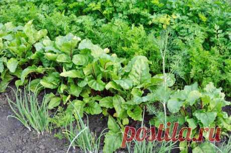 Совместимость растений на грядке: подробный список
