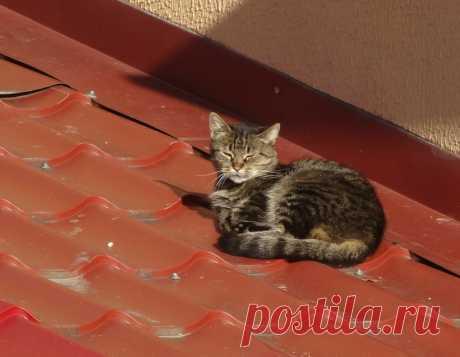 Лепота #кошки #на_крыше