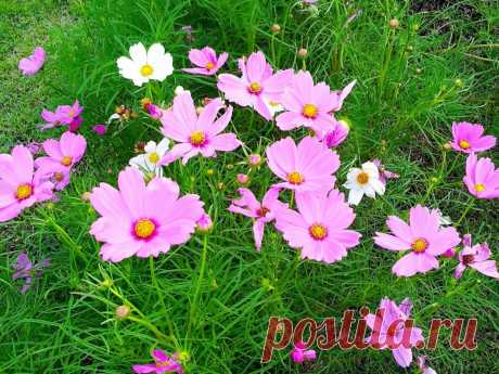 13 идей для клумбы на солнцепёке: цветы, которые не боятся жары — Roomble.com