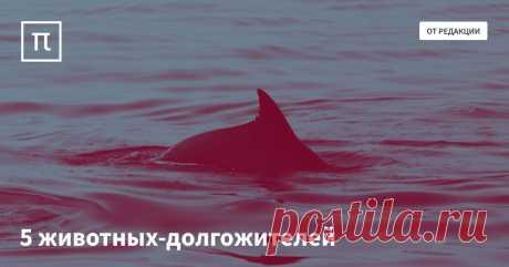Почему киты, летучие мыши и голые землекопы живут так долго