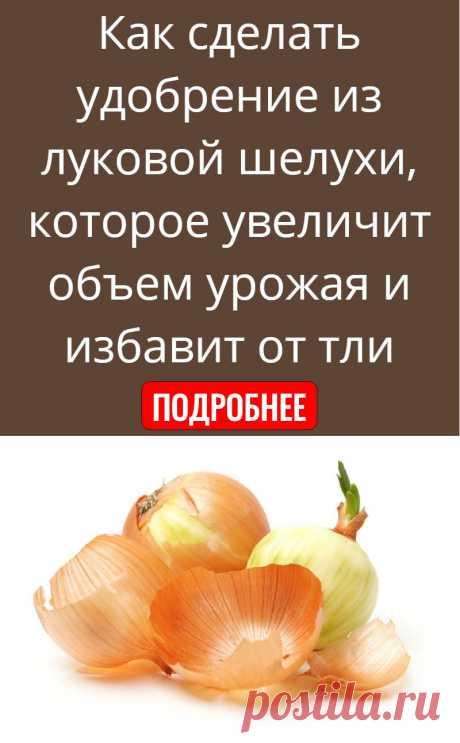 Как сделать удобрение из луковой шелухи, которое увеличит объем урожая и избавит от тли