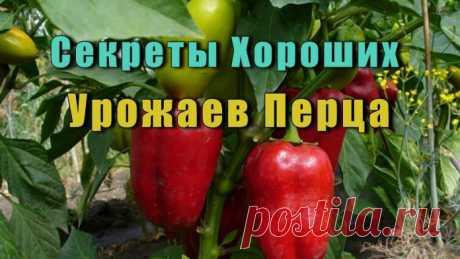 Секреты Хороших Урожаев Перца - Формирование растения --  позволяющее повысить его урожайность в различных условиях выращивания...
