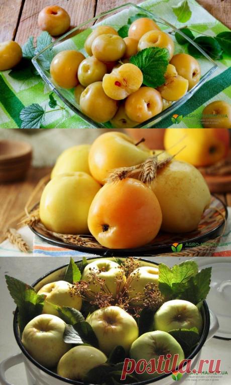 Рецепт моченых яблок: как приготовить моченые яблоки в домашних условиях | Agro-Market