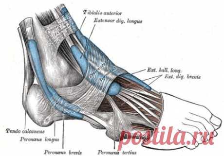 Как вылечить боль в стопе и пятке? | [Как вылечить боль в стопе и пятке?Как вылечить боль в стопе и пятке?