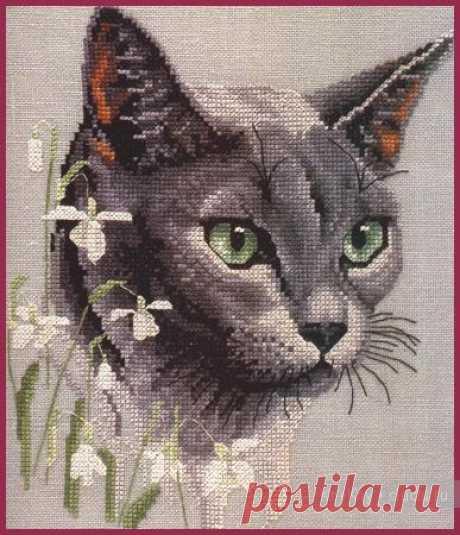 Схемы вышивки. Кот / Вышивание крестиком - схемы вышивки для начинающих, картинки / КлуКлу. Рукоделие - бисероплетение, квиллинг, вышивка крестом, вязание