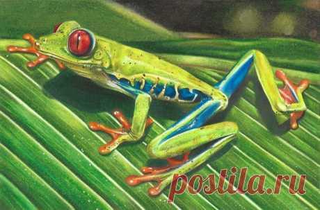 Frog Drawing A4 Print CMcSparronArt | Etsy
