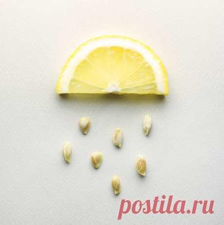 Полезные свойства лимонных косточек для организма / Будьте здоровы