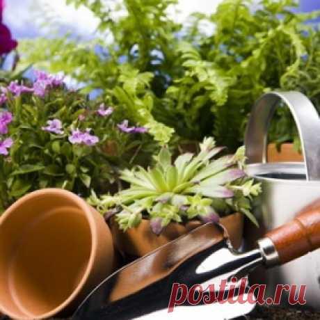 El cuidado de las plantas de salón en invierno: los consejos de los floricultores