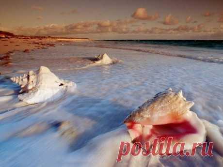 «Шум моря» в ракушке – один из самых распространенных мифов нашего детства. Улыбаемся и развенчиваем его в трех предложениях.