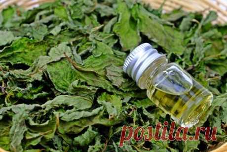 Чай из листьев: какие растения можно и нужно заваривать | Статьи (Огород.ru)