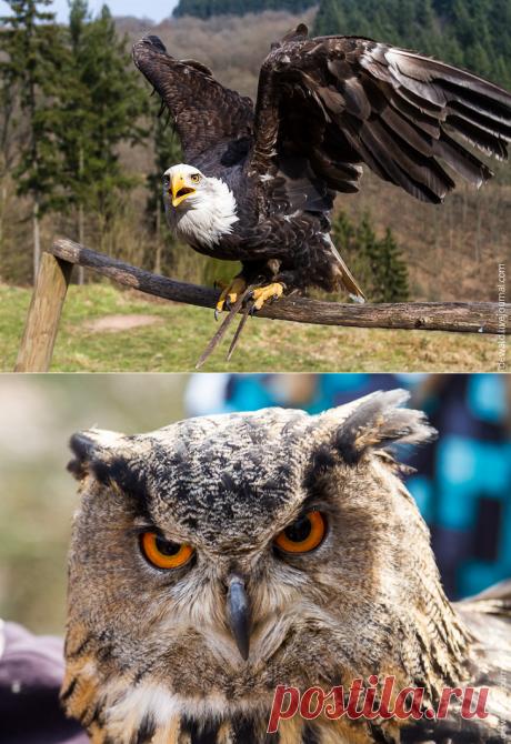 Парк хищных птиц — Наука и жизнь