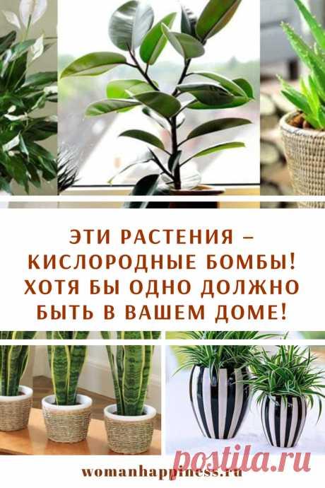 Эти растения – кислородные бомбы! Хотя бы одно должно быть в вашем доме!  Многие растения умеют очищать воздух дома, собирая пыль, задымление и другие частицы и тяжелые соединения, опасные для здоровья.  Вот 6 лучших растений, которые вы должны иметь в вашем доме: ➡️ Читайте, кликнув на фото