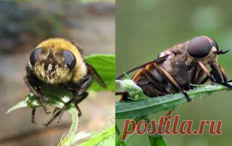 Оводы и слепни: Незнание разницы между двумя этими насекомыми объединяет всё СНГ - Книга животных - медиаплатформа МирТесен