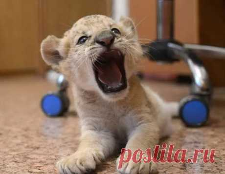 Забавные картинки с животными. Подборка №zabavatut-ani-59230327052020 . Тут забавно !!!