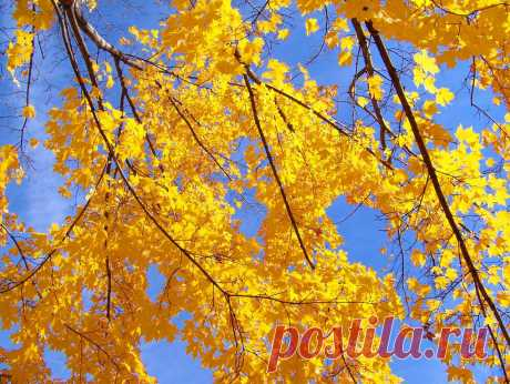 Autumn Leaves And Blue Sky  Free Stock Photo HD - Public Domain Pictures