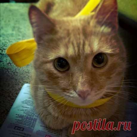 #cat #catstagram #petstagram #pets #instapet #cats