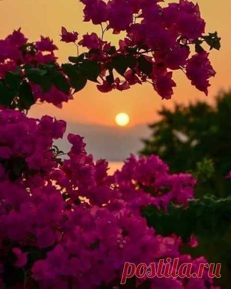 Մեր օրերում ամենամեծ արկածախնդրությունը հանգիստ, խաղաղ կյանքն է: Էրիխ Մարիա Ռեմարկ  Աշխարհն այնպիսին է, ինչպիսին որ կա: Պետք չէ ոչինչ ապացուցել, գեղեցկությունը` տեսանելի է, խելացիությունը` լսելի, իսկ բարությունը` զգում ես։ Դմիտրի Նագիև