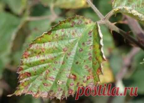 Ржавчина растений – признаки болезни и способы борьбы с ней - МирТесен