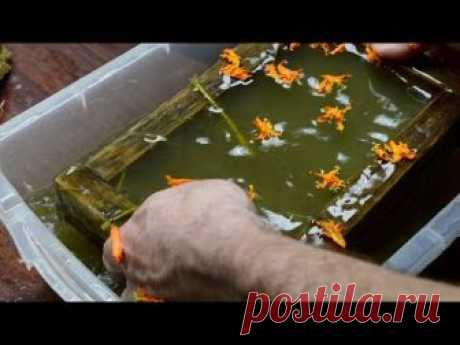 Making Paper From Plants: Vacant Lot Grass