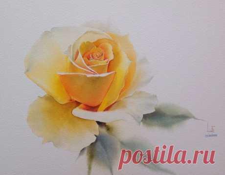 Розы художника La Fe