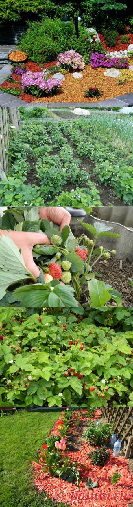 Удачные виды мульчи для сада и огорода | Самоцветик