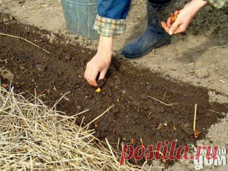 Секреты народ ные про дела огородные